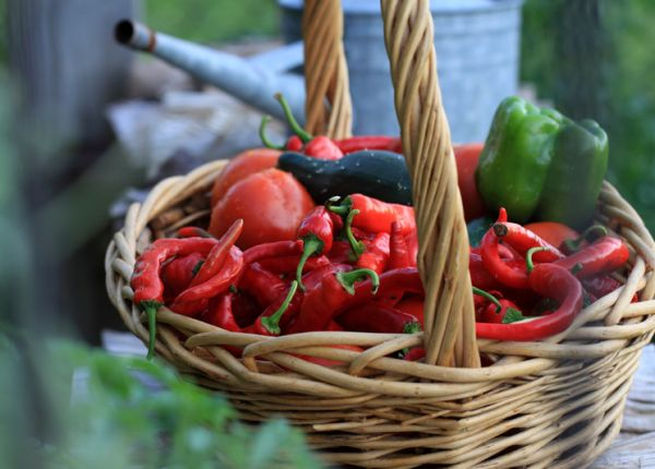 Guide to home grown Chillies