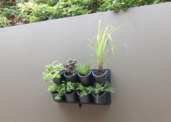 Guide to growing herbs in a vertical garden