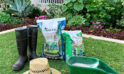 baileys lawn reviver 3.1.1 shot