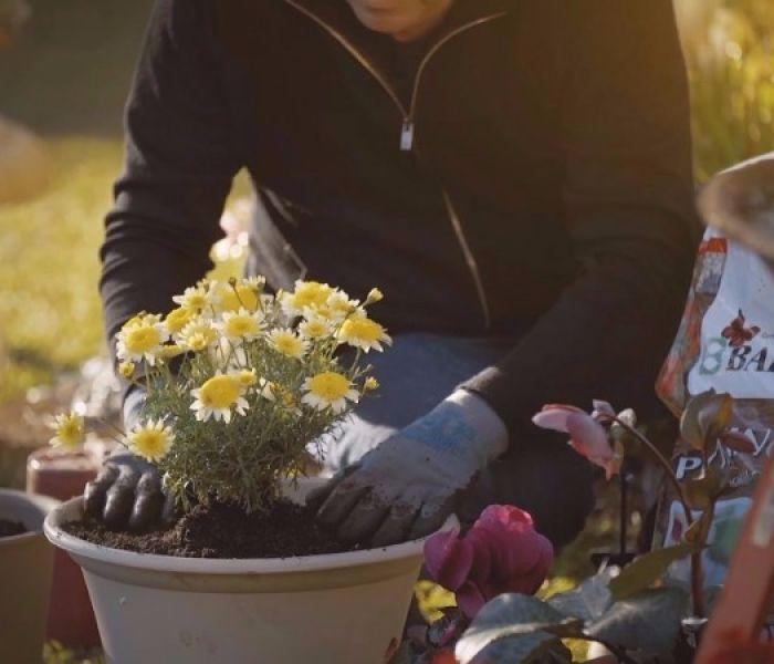 Gardening Guides - Baileys Fertilisers