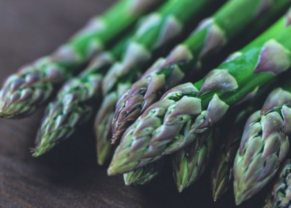 Time to plant Asparagus in WA