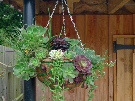 Hanging Basket Covered In Succulent Varieties