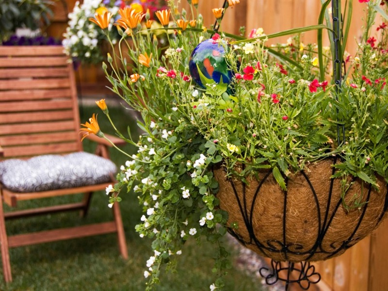 Colourful Flowers In Hanging Basket