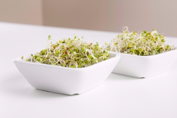 Broccoli Sprouts In White Bowls