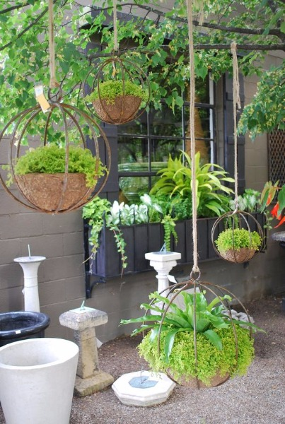 Hanging Plant Baskets From Tree Branches