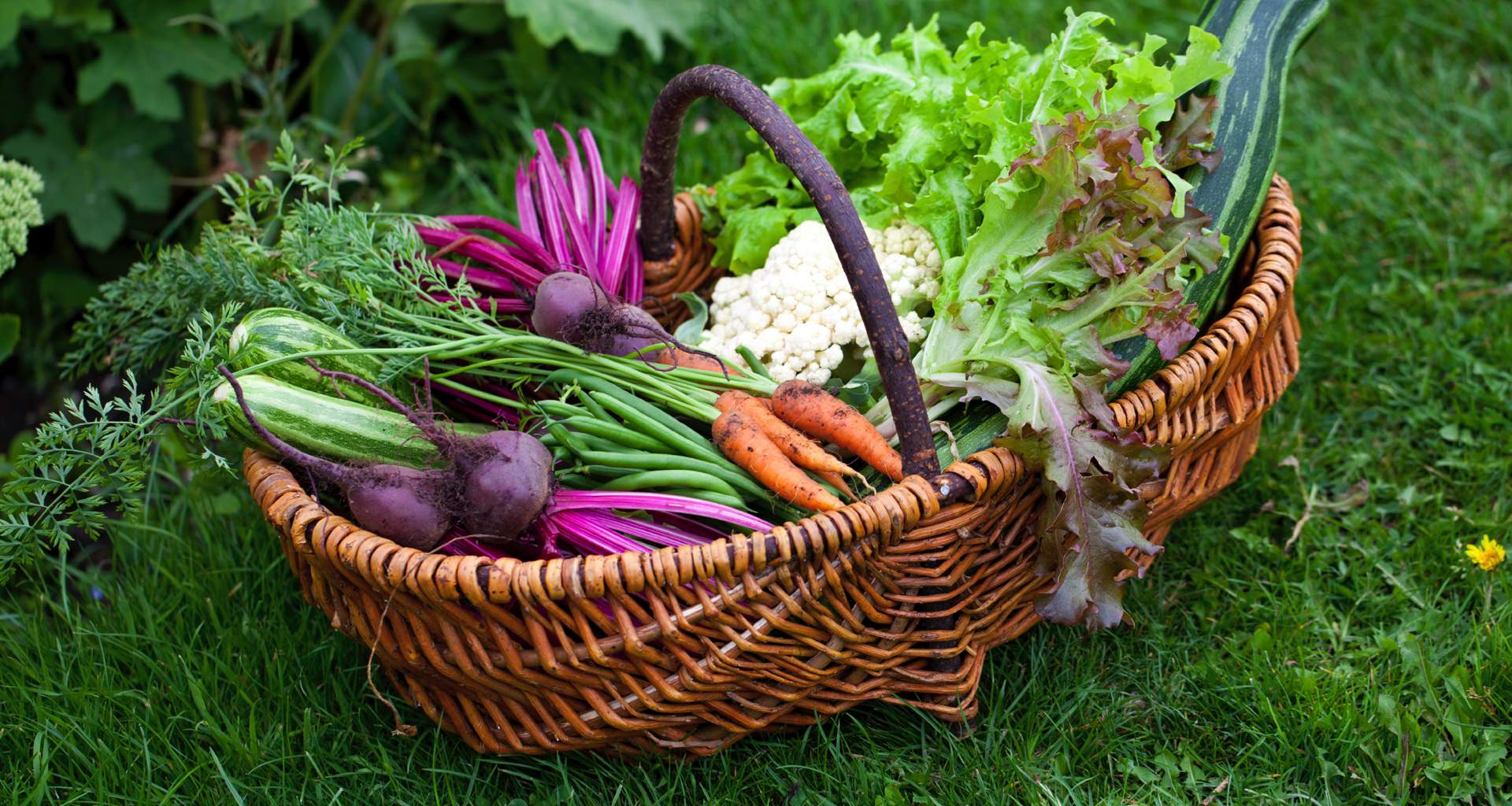 Wicker Basket Of Colourful Vegetables From Garden