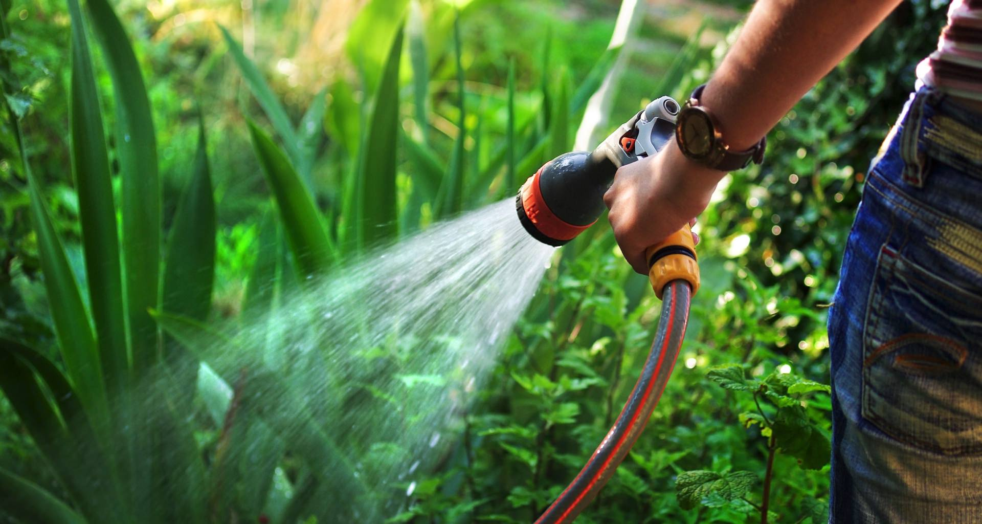 Watering Plants With Hose Pipe